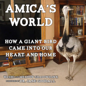 amicas world book cover