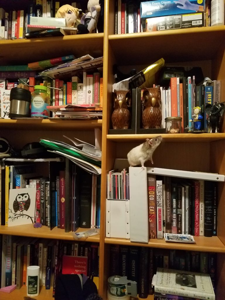 A wooden bookshelf covered in books and home items, with a small rat on one shelf